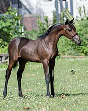 http://www.lilachillstables.com/mares_files/PearlFoals/Lilac-Hills-Paisley-sm.jpg