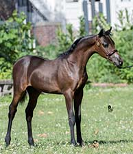 http://www.lilachillstables.com/mares_files/PearlFoals/Pearl2016Filly-sm.jpg